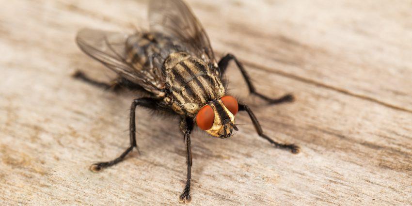 El umbral de tolerancia ante una plaga var a seg n qui n - Como sacar las moscas de la casa ...