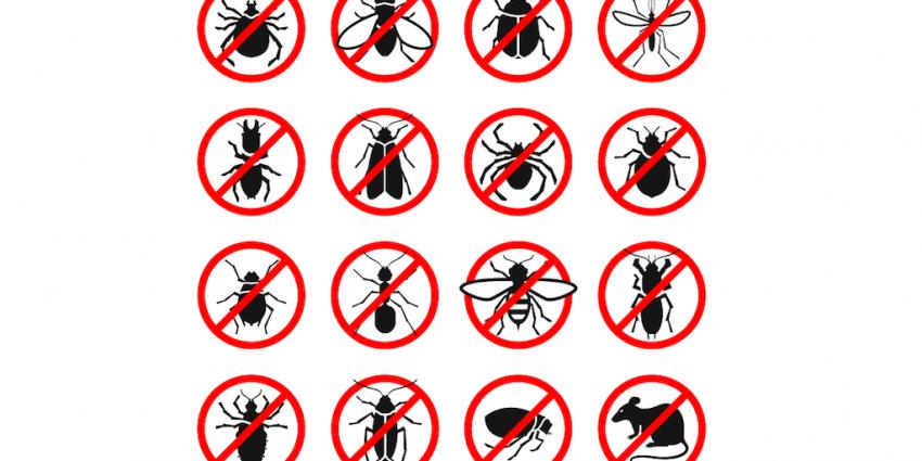 Plagas más comunes en bares y restaurantes de Tenerife