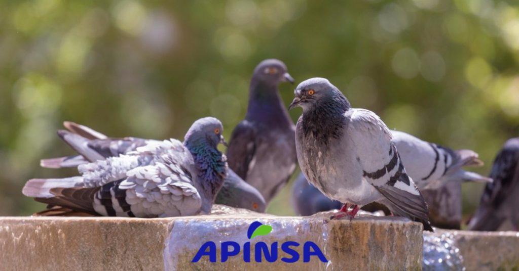 Como ahuyentar palomas mira c 243 mo ahuyentar a las for Ahuyentar palomas del balcon