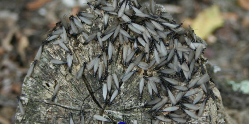 Xilófagos más comunes en Canarias