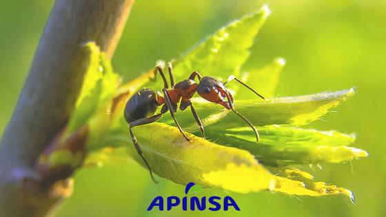 Control de hormigas en hogares durante primavera