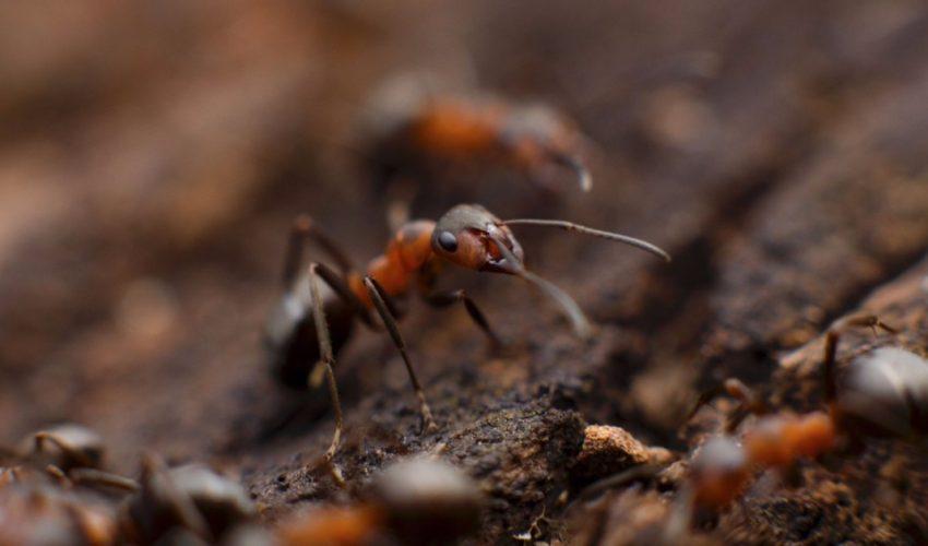 Exterminar las hormigas durante el verano de manera eficaz