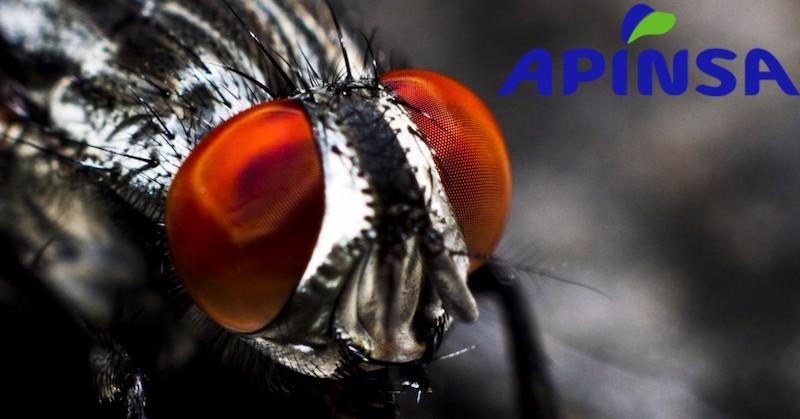 Los tipos de moscas más comunes en Canarias y España