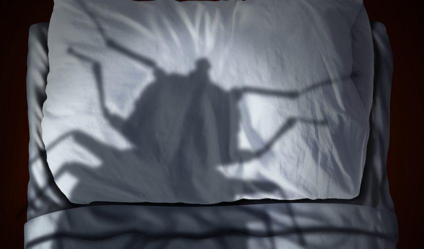 Riesgos de los chinches de cama para la salud humana