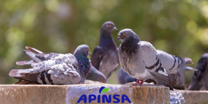 Ahuyentar a las palomas eficazmente
