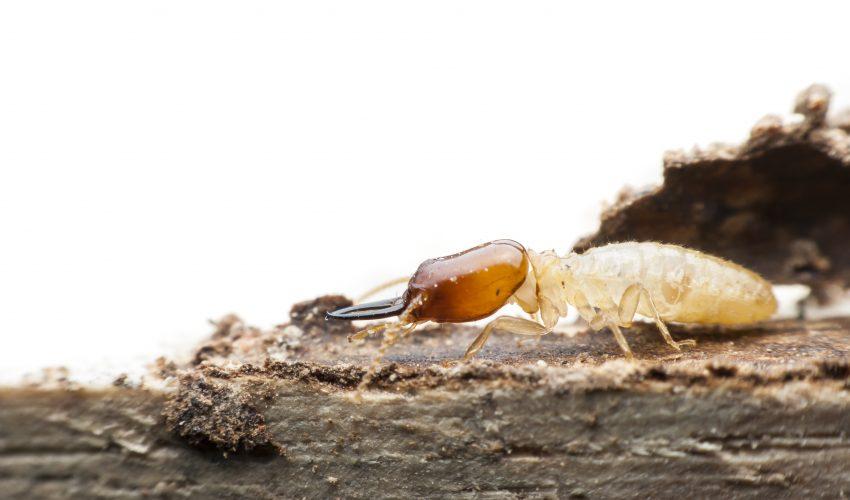 Problema de termitas en comunidades de vecinos