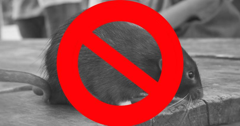 Eliminar ratones durante el invierno