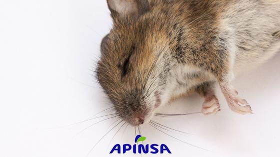 Control de ratones en hogares de Tenerife durante la primavera