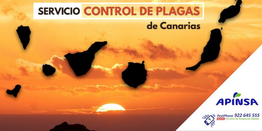 Servicio de Control de plagas en Canarias
